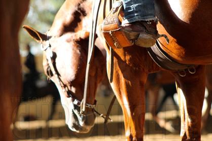 Day 6-7 Photos 2014 Quarter Horse Congress