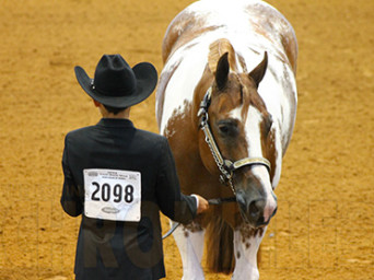 Get a Leg Up on the Competition! View APHA World Show Patterns Online Today Via New Method