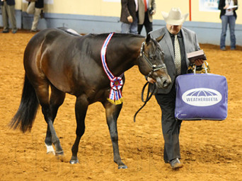AQHA World Performance Halter Wins Go to Grant/Inspirado, Laney/Upgrade To Escalade, and Roark/Most Appealing Dream