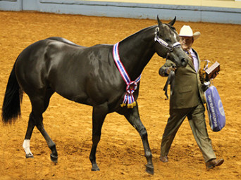 Weanling and Yearling Colts Wins Go to Castle/ZS Celebrite GQ and Roark/Rumerz