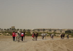 The Canadian team heading from the quarantine barn to the vetting area for trot-in. Photo Credit: Dessia Miller