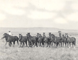 "Artifacts and Photos on Display at ""Breeding a Legacy: 75 Years of American Quarter Horses"" Exhibit"