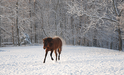 EC Photo of the Day: Horse Snow Day!