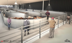 Temple Grandin Livestock Handling Systems. © ARK Development, LLC, 2011-2013