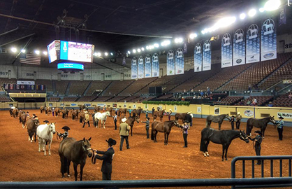 Performance Halter Rule at 2019 Adequan Select World