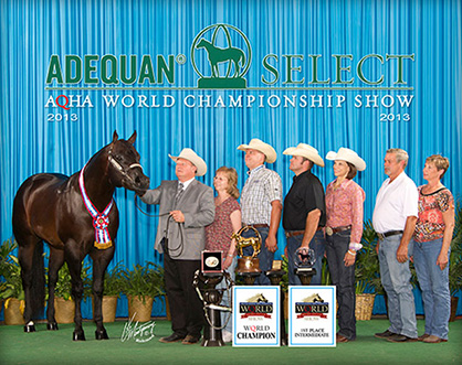 World Champions Tack And More Selling In Pro Horse Services July Online Auction Equine Chronicle