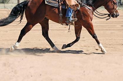 Ranch Horse Riding Fundamentals – Part 2