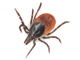 Act Now to Prevent Tick Paralysis