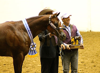 Halter Amateur Mare Winners Include Peden Berris Koch