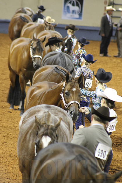 University of Minn. Begins Largest Ever Study on Muscle Disease in the Horse