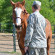 Study Shows Therapeutic Horseback Riding Has Beneficial Impact on Combat-Related PTSD in Veterans