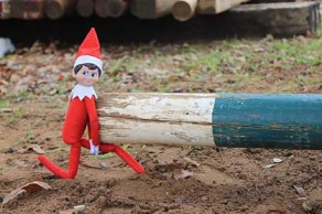 Forget the Shelf, Equine Chronicle Elf is Going to the Barn!