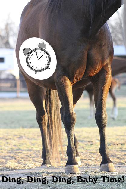 Breeding Season Prep- Estrous Cycle Regulation