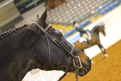 Does Bitting Up a Horse For The First Time Cause Stress?