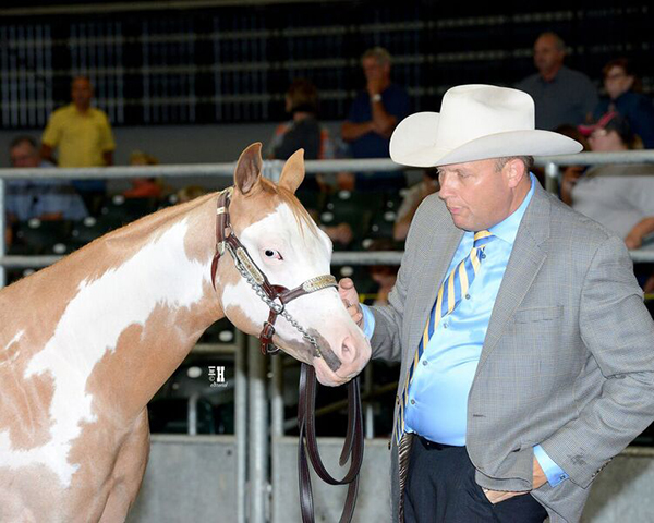 Breeders Halter Futurity Votes to Include Additional Color Registries