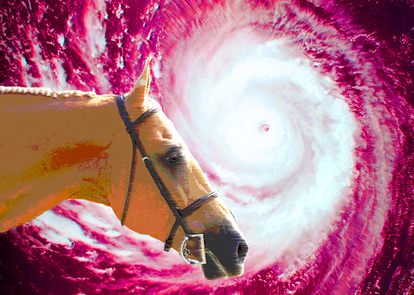Heading For Higher Ground- Hurricane Preparedness Tips