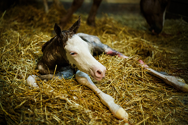 EC Photo of the Day- Fresh Foal