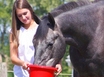Feeding Horses to Help Prevent or Treat Ulcers