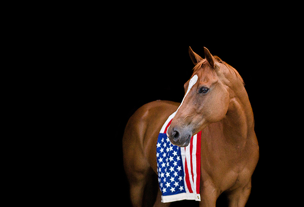 Happy Memorial Day! From The Equine Chronicle