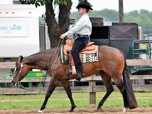 Shop For Your New Horse in June Internet Auctions
