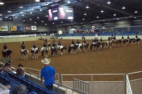 Paint Horse Congress Adds 6 Color Breed Classes With $1,000 Added!