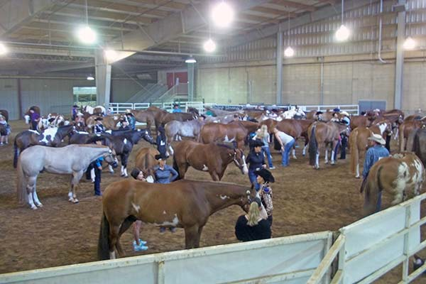 New Classes Added to 2018 Paint Horse Congress
