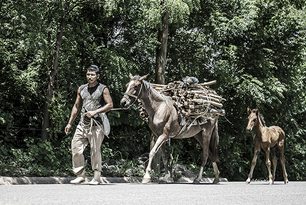 Charity Working to Help Equines Affected by Guatemala Volcano