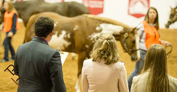 """APHA World, AQHA World, and QH Congress Debut """"Triple Crown"""" of Collegiate Horse Judging"""