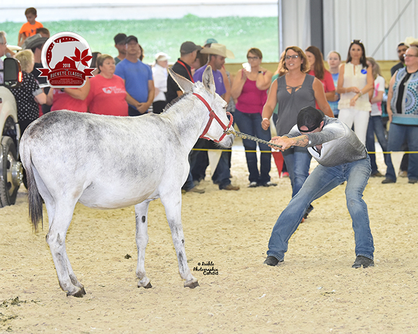 EC Video- Buckeye Classic Donkey Races!