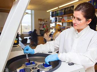 Decoding Rabicano – A Study of Equine Genetics