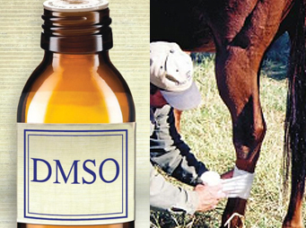 DMSO – So Many Ways To Help Your Horse