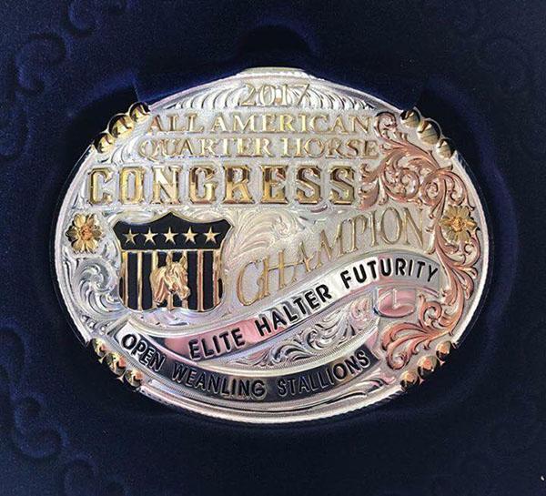 Elite Halter Futurity Returning to 2018 QH Congress