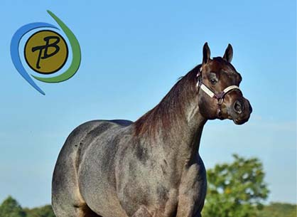 AQHA Stallions, Telasecret and Initials Only, Under New Management