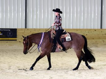 Can You Have a DIY Horse and Compete Successfully at the Majors?
