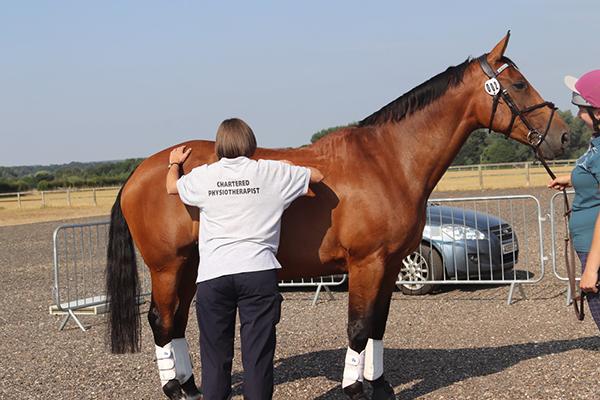 Vets Test New Method For Equine Performance Assessment