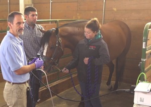 Equine Gastroscopy Educational Videos Now Available for Veterinarians