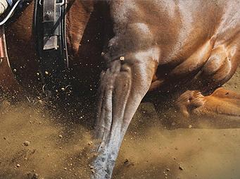 Cellυlitis in Horses