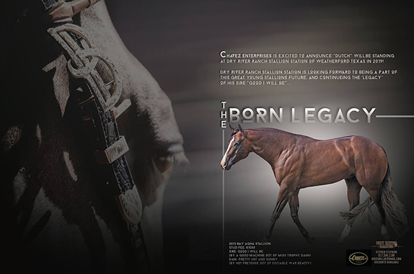 Congress Champion Open Performance Halter Stallion, The Born Legacy, to Stand 2019 Season at Dry River Ranch