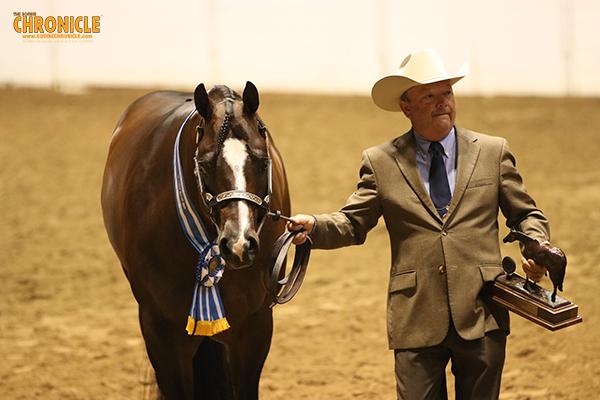 EC Video- 2018 QH Congress- Open Grand Champion Stallion