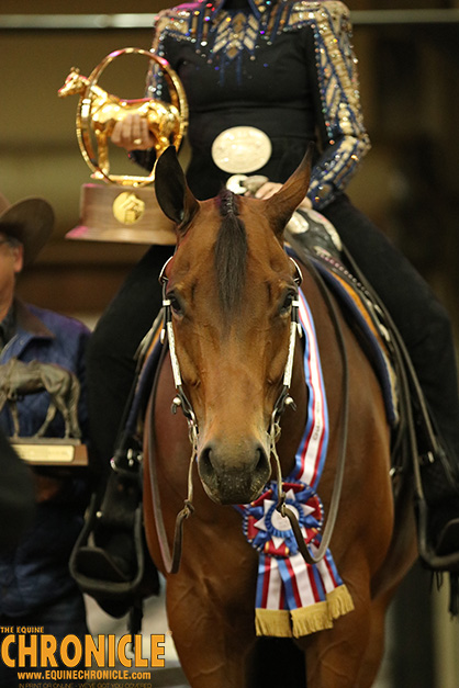 Check out Qualifying Points Required For 2019 AQHA World