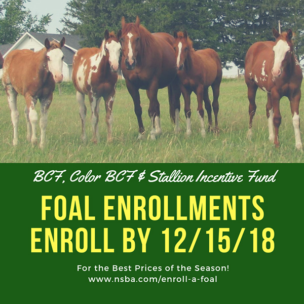 Enroll Your Foal with NSBA by 12/15/2018