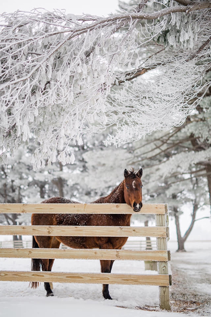 EC Photo of the Day- Baby, It's Cold Outside