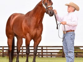 Two Internet Horse Auctions Close This Week