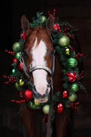 EC Photo of the Day- All Decked Out For Christmas!