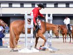 Around the Rings at NSBA Fun In The Sun Extravaganza