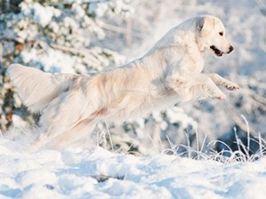 Keep Your Barn Dog Safe During Winter Months