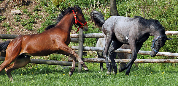 Horse Behavior and Safety Online Course For Teens and Adults