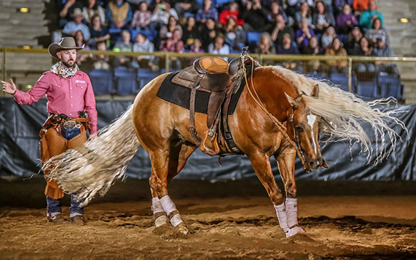 Around the Rings- Evening of Dancing Horses at NWSS