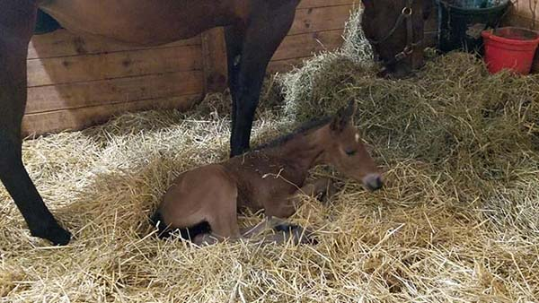 EC Photo of the Day: First Foal of 2019 For Too Sleepy To Zip