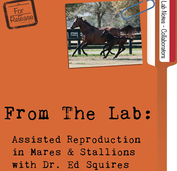 From The Lab: Assisted Reproduction In Mares and Stallions